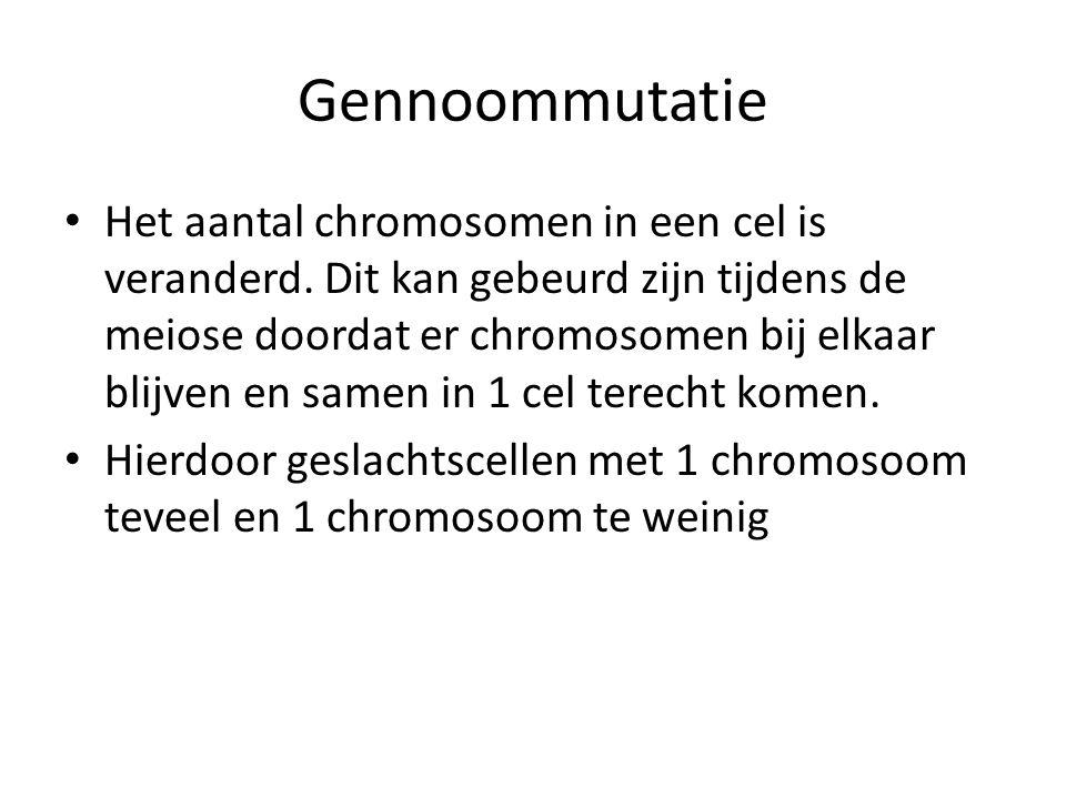 Gennoommutatie Het aantal chromosomen in een cel is veranderd. Dit kan gebeurd zijn tijdens de meiose doordat er chromosomen bij elkaar blijven en sam