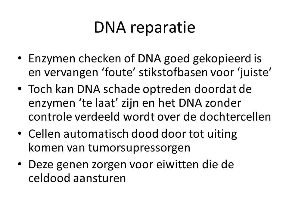 DNA reparatie Enzymen checken of DNA goed gekopieerd is en vervangen 'foute' stikstofbasen voor 'juiste' Toch kan DNA schade optreden doordat de enzym