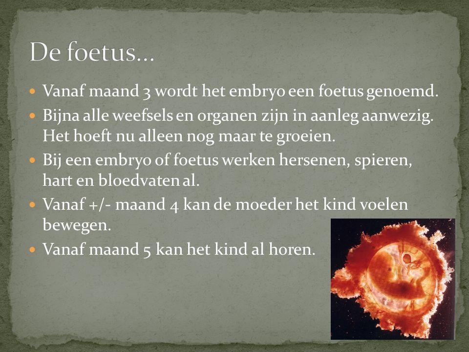Vanaf maand 3 wordt het embryo een foetus genoemd. Bijna alle weefsels en organen zijn in aanleg aanwezig. Het hoeft nu alleen nog maar te groeien. Bi