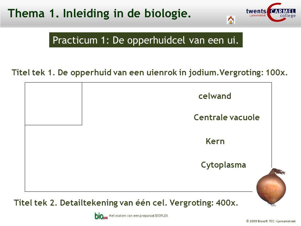 © 2009 Biosoft TCC - Lyceumstraat Practicum 1: De opperhuidcel van een ui.