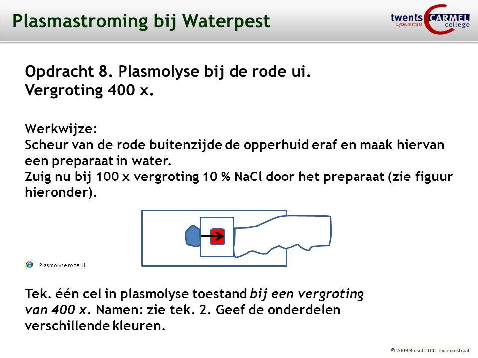 © 2009 Biosoft TCC - Lyceumstraat Plasmastroming bij Waterpest Opdracht 8. Plasmolyse bij de rode ui. Vergroting 400 x. Werkwijze: Scheur van de rode
