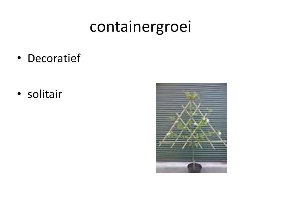containergroei Decoratief solitair