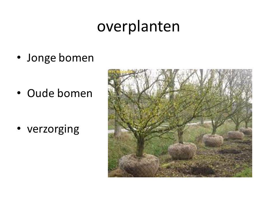 overplanten Jonge bomen Oude bomen verzorging
