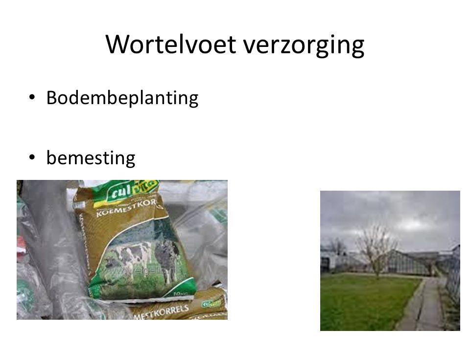 wortelkroon Vermeerdering van haarwortels Ent en oculatie bewaking Verwijdering van wildgroei van de onderstam