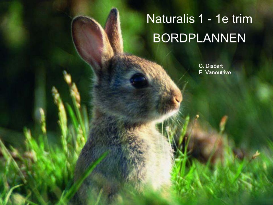 Naturalis 1 - 1e trim BORDPLANNEN C. Discart E. Vanoutrive