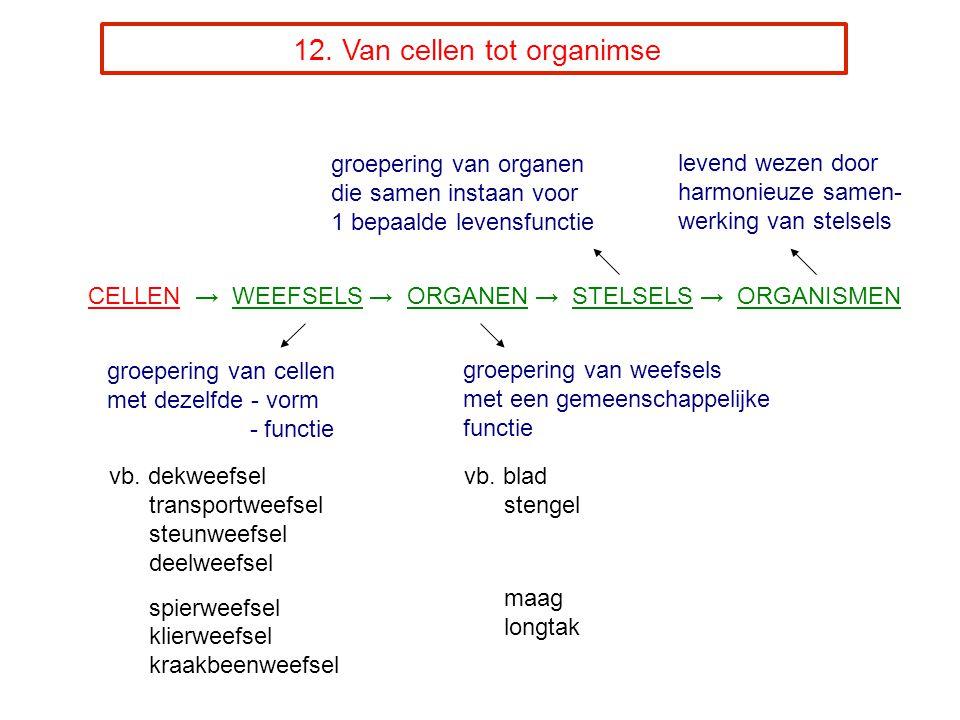 12.Van cellen tot organimse vb.