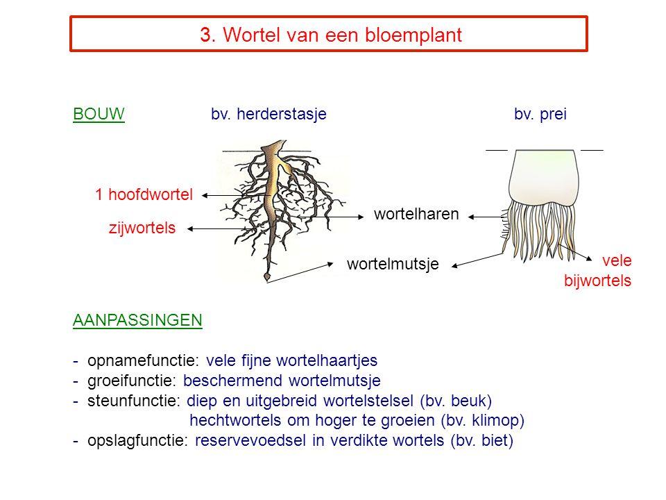 3.Wortel van een bloemplant BOUW bv. herderstasje bv.