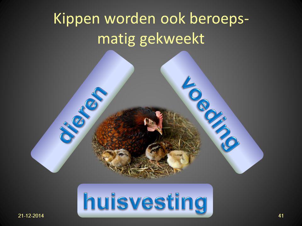 Kippen worden ook beroeps- matig gekweekt 21-12-201441