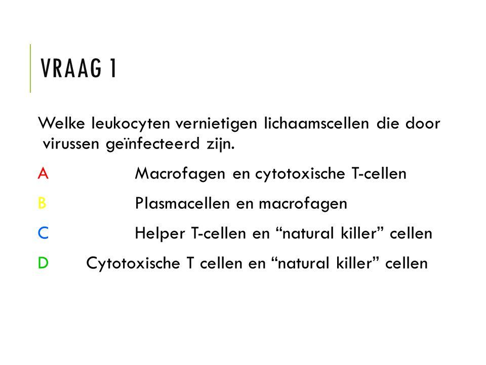 VRAAG 1 Welke leukocyten vernietigen lichaamscellen die door virussen geïnfecteerd zijn. AMacrofagen en cytotoxische T-cellen BPlasmacellen en macrofa
