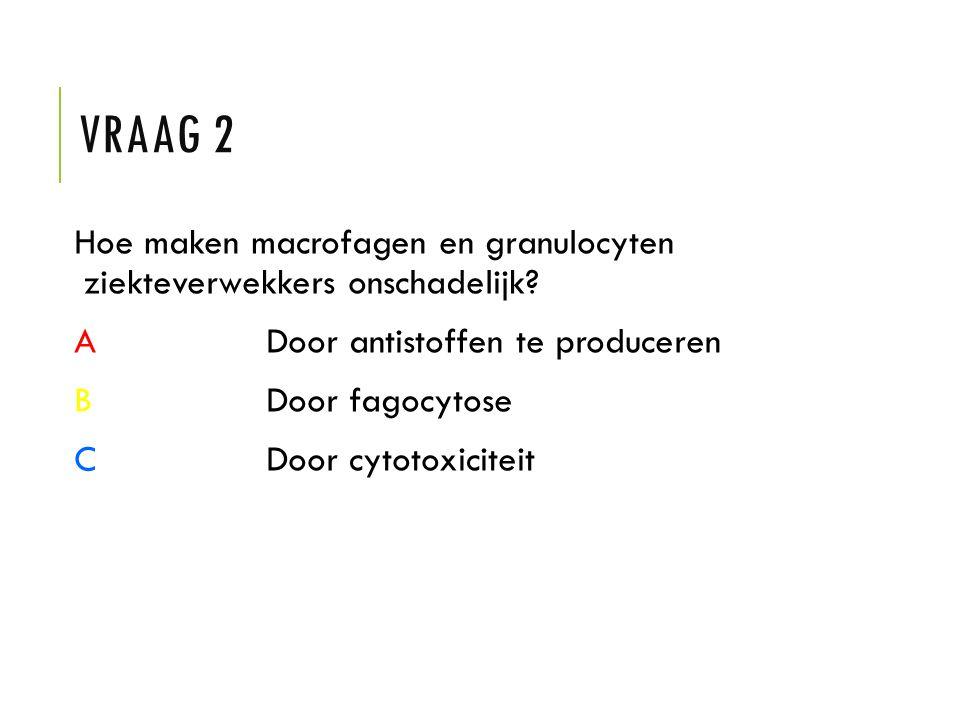 VRAAG 2 Hoe maken macrofagen en granulocyten ziekteverwekkers onschadelijk? ADoor antistoffen te produceren BDoor fagocytose CDoor cytotoxiciteit