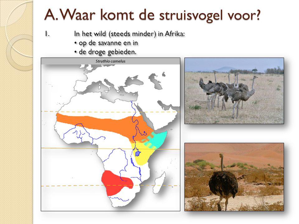 1. In het wild (steeds minder) in Afrika: op de savanne en in de droge gebieden. 1. In het wild (steeds minder) in Afrika: op de savanne en in de drog