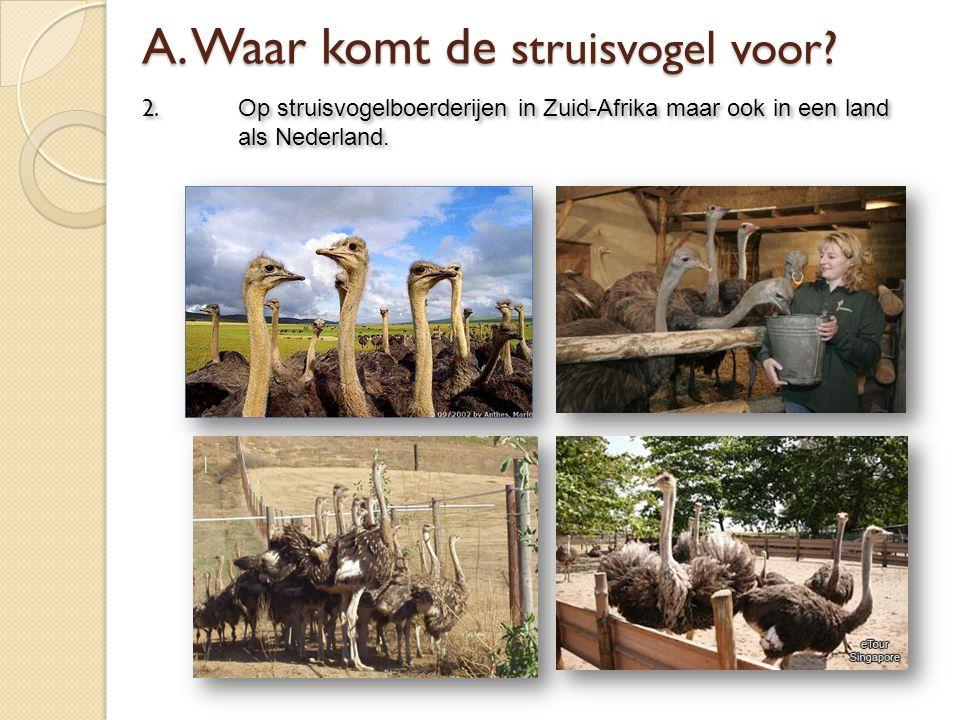 2. Op struisvogelboerderijen in Zuid-Afrika maar ook in een land als Nederland.
