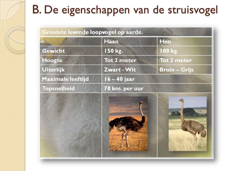 B. De eigenschappen van de struisvogel