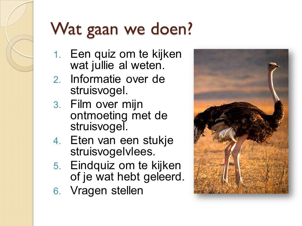 Wat gaan we doen? 1. Een quiz om te kijken wat jullie al weten. 2. Informatie over de struisvogel. 3. Film over mijn ontmoeting met de struisvogel. 4.
