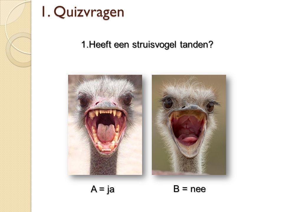 1.Heeft een struisvogel tanden? A = ja B = nee 1. Quizvragen