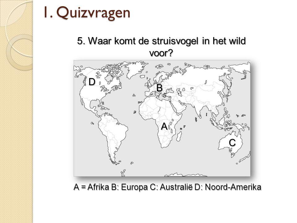 1. Quizvragen 5. Waar komt de struisvogel in het wild voor? A = Afrika B: Europa C: Australië D: Noord-Amerika A B C D