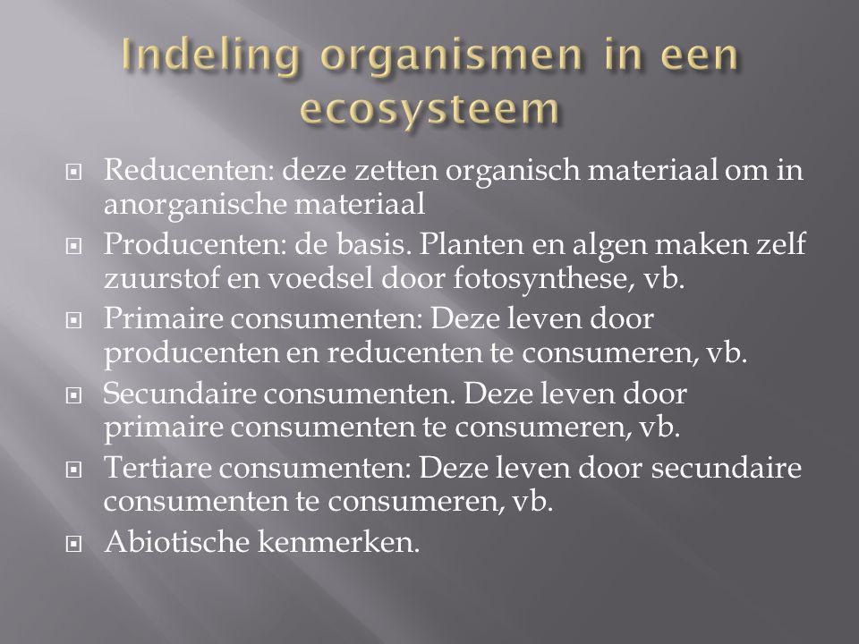  Reducenten: deze zetten organisch materiaal om in anorganische materiaal  Producenten: de basis. Planten en algen maken zelf zuurstof en voedsel do