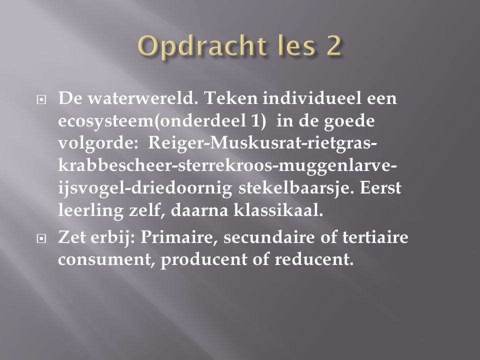  De waterwereld. Teken individueel een ecosysteem(onderdeel 1) in de goede volgorde: Reiger-Muskusrat-rietgras- krabbescheer-sterrekroos-muggenlarve-