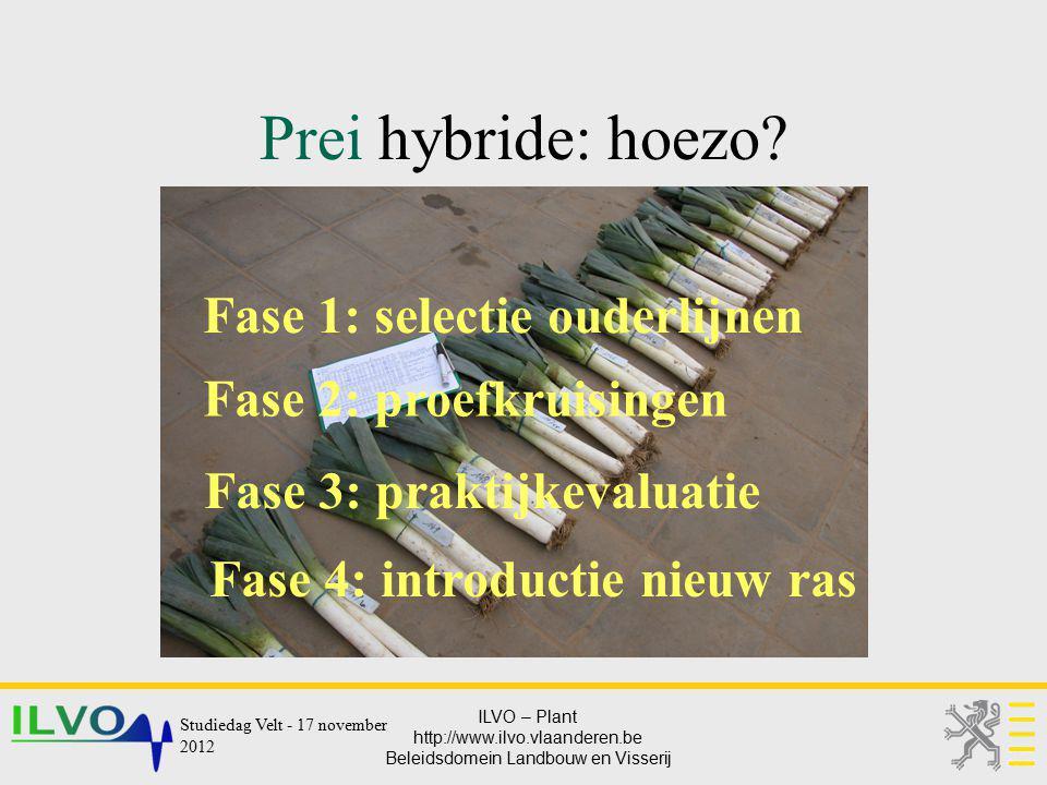 ILVO – Plant http://www.ilvo.vlaanderen.be Beleidsdomein Landbouw en Visserij Prei hybride: hoezo? Fase 1: selectie ouderlijnen Fase 2: proefkruisinge