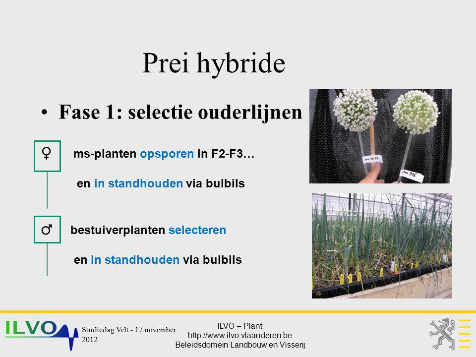 ILVO – Plant http://www.ilvo.vlaanderen.be Beleidsdomein Landbouw en Visserij Prei hybride Fase 1: selectie ouderlijnen ♀ ms-planten opsporen in F2-F3