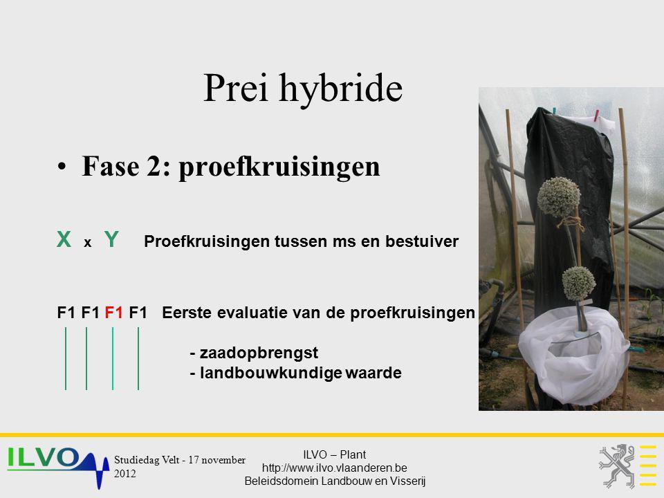 ILVO – Plant http://www.ilvo.vlaanderen.be Beleidsdomein Landbouw en Visserij Prei hybride Fase 2: proefkruisingen X x Y Proefkruisingen tussen ms en
