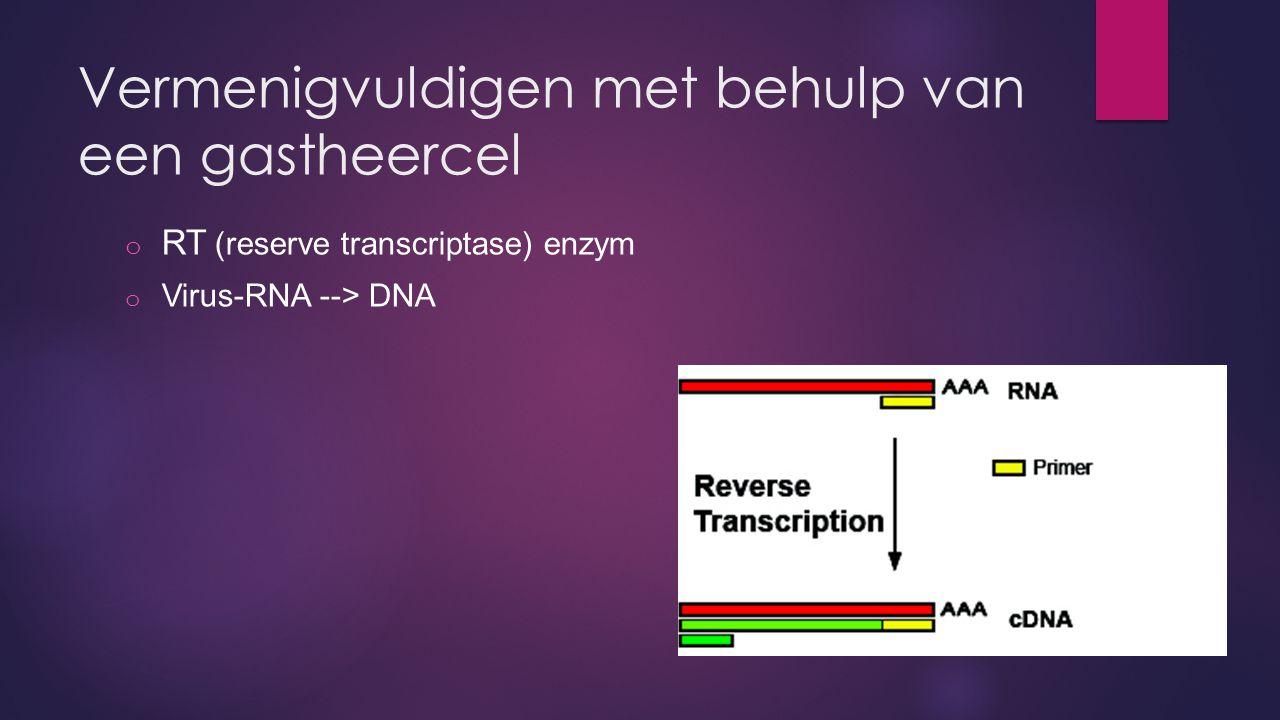 Vermenigvuldigen met behulp van een gastheercel o RT (reserve transcriptase) enzym o Virus-RNA --> DNA