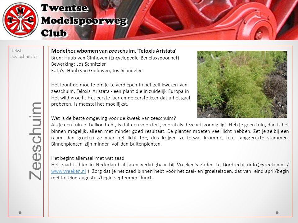 Modelbouwbomen van zeeschuim, 'Teloxis Aristata' Bron: Huub van Ginhoven (Encyclopedie Beneluxspoor.net) Bewerking: Jos Schnitzler Foto's: Huub van Gi
