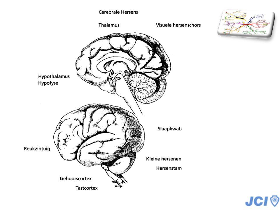 De hersenen een wonder