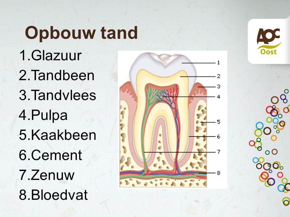 Opbouw tand 1.Glazuur 2.Tandbeen 3.Tandvlees 4.Pulpa 5.Kaakbeen 6.Cement 7.Zenuw 8.Bloedvat