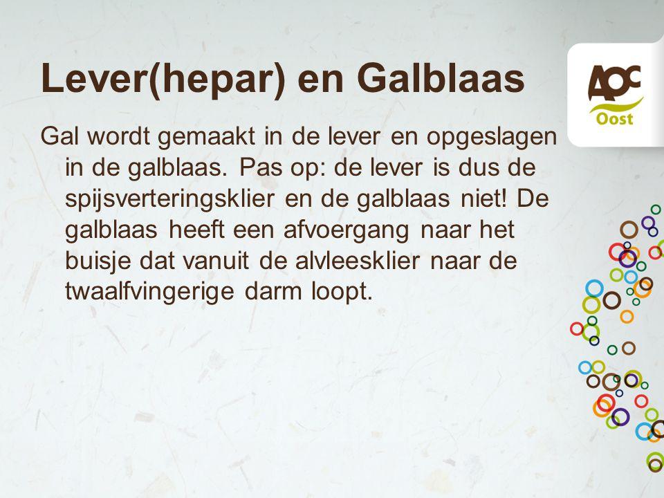 Lever(hepar) en Galblaas Gal wordt gemaakt in de lever en opgeslagen in de galblaas.