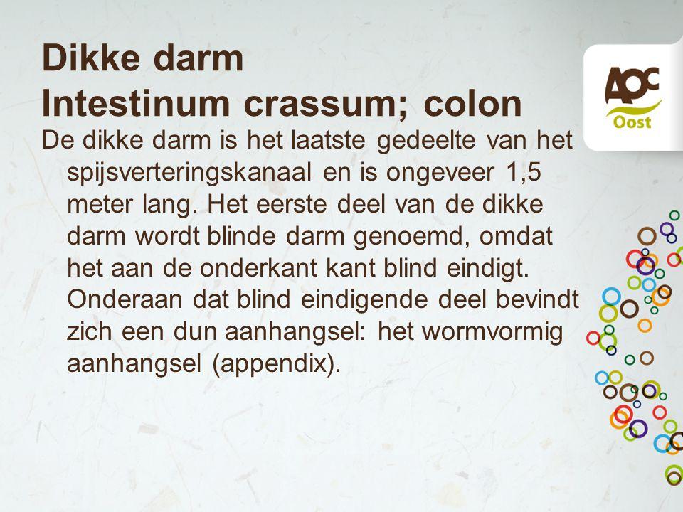 Dikke darm Intestinum crassum; colon De dikke darm is het laatste gedeelte van het spijsverteringskanaal en is ongeveer 1,5 meter lang.
