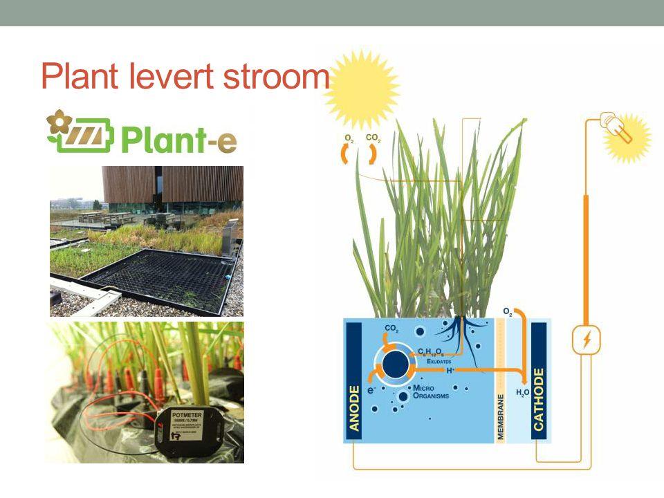 Plant levert stroom