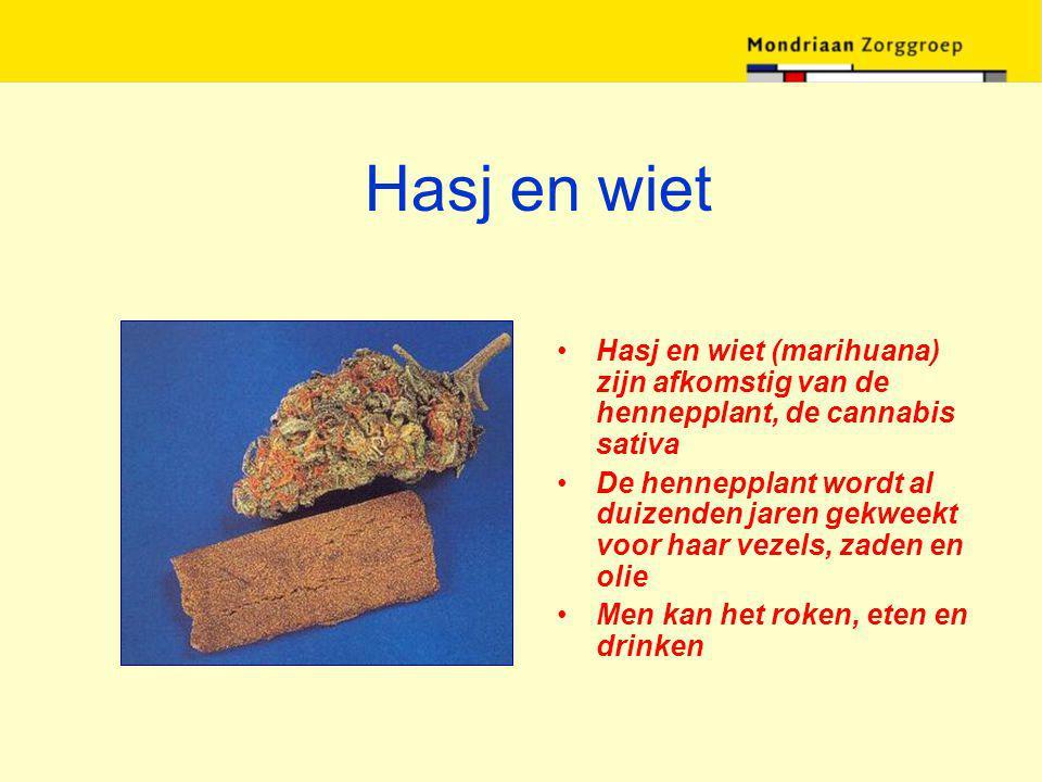 Hasj en wiet Hasj en wiet (marihuana) zijn afkomstig van de hennepplant, de cannabis sativa De hennepplant wordt al duizenden jaren gekweekt voor haar