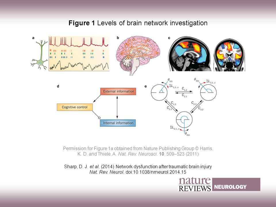 WAA frontaal letsel3 Figure 1 Levels of brain network investigation Sharp, D.