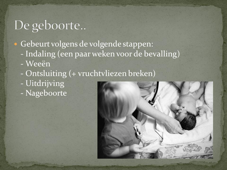 Gebeurt volgens de volgende stappen: - Indaling (een paar weken voor de bevalling) - Weeën - Ontsluiting (+ vruchtvliezen breken) - Uitdrijving - Nageboorte