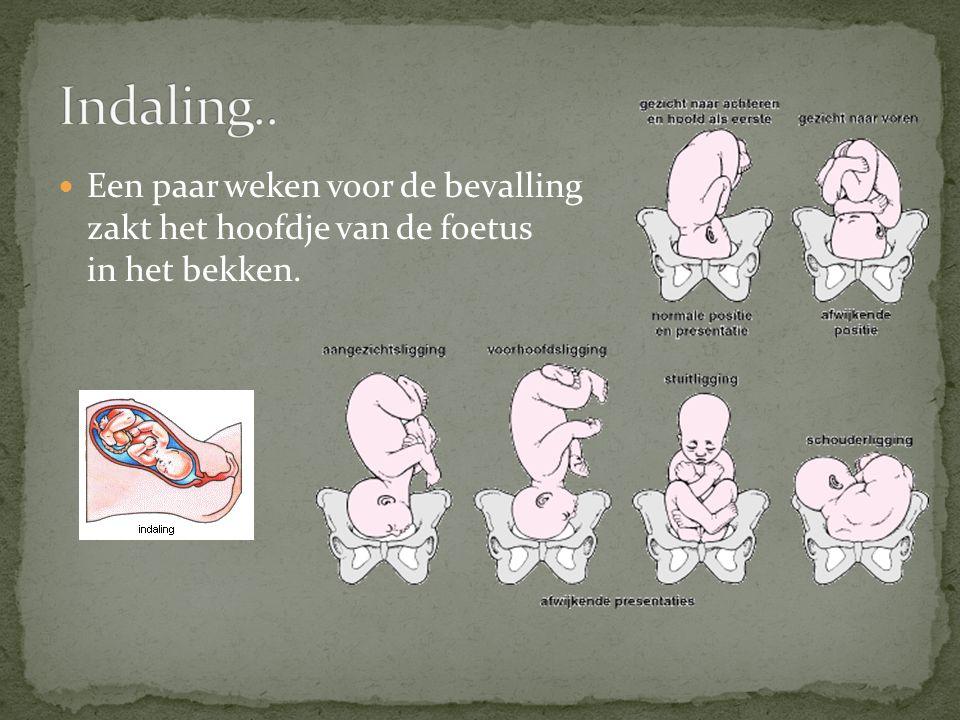 Een paar weken voor de bevalling zakt het hoofdje van de foetus in het bekken.
