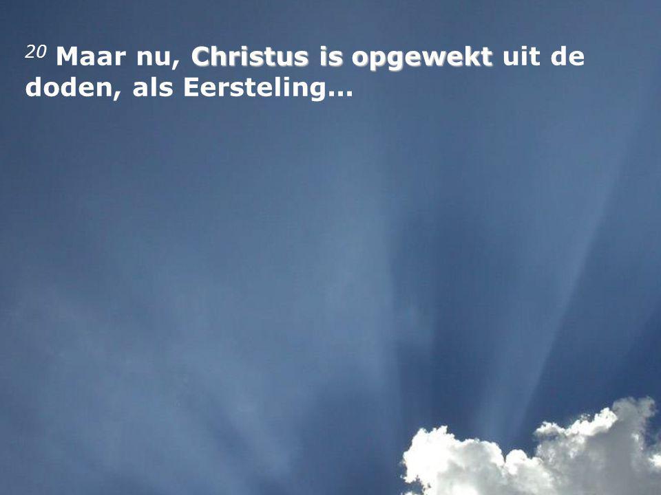 Christus is opgewekt 20 Maar nu, Christus is opgewekt uit de doden, als Eersteling...