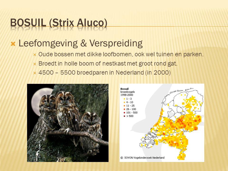  Leefomgeving & Verspreiding  Oude bossen met dikke loofbomen, ook wel tuinen en parken.