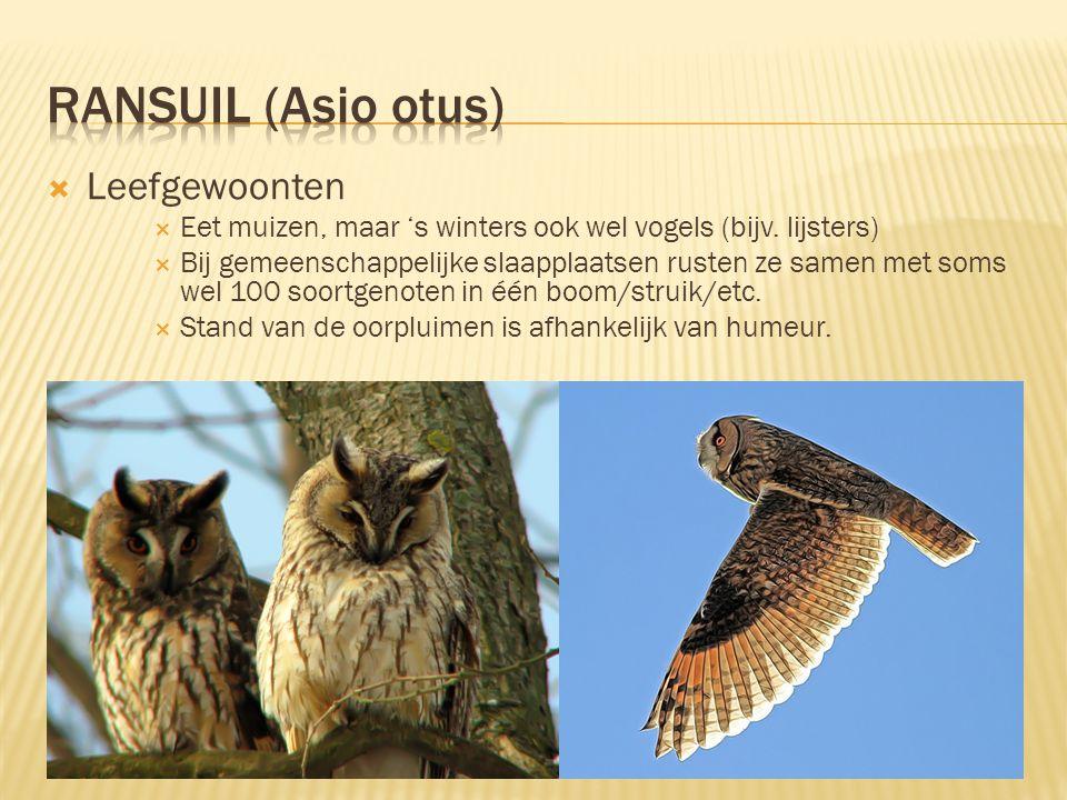  Kenmerken  31 tot 37 cm lang, spanwijdte 84 tot 98 cm  Grijsoranje verenkleed en gezichtssluier, binnenkant vleugel wit bij ♂ en beige bij ♀  Ora