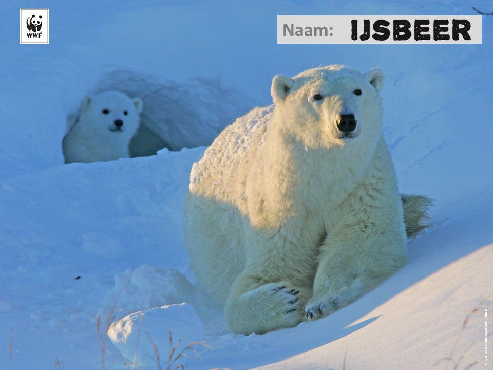 © David Jenkins/trackerbaz.com/WWF-Canada Naam: