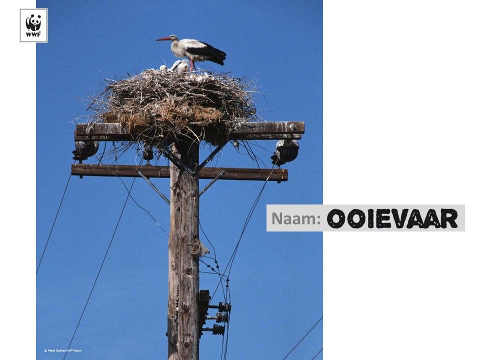 © Michel Gunther/WWF-Canon Naam: