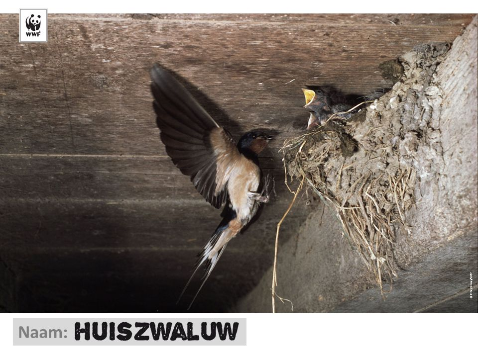 © Frédy Mercay/WWF Naam: