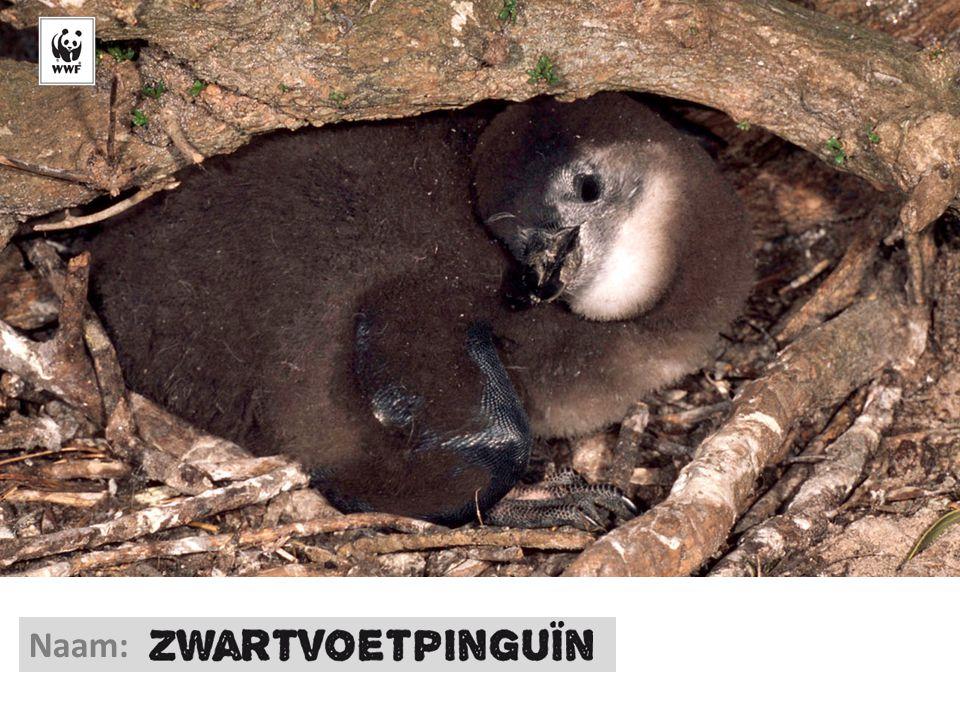 © Martin Harvey/WWF-Canon Naam:
