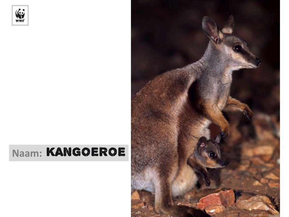 © naturepl.com/Edwin Giespers/WWF-Canon Naam: