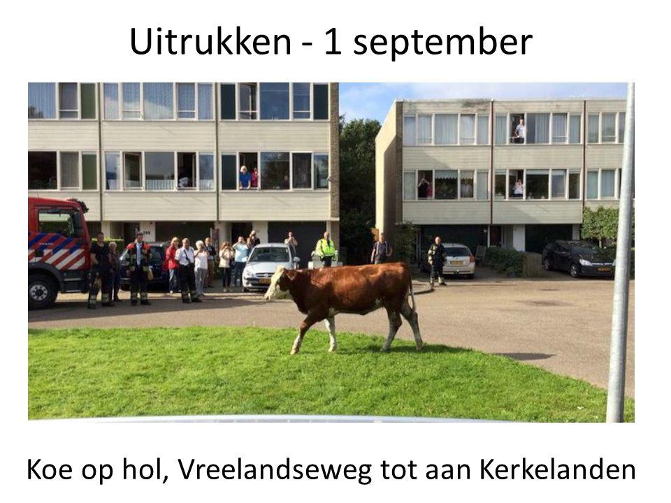 Uitrukken - 1 september Koe op hol, Vreelandseweg tot aan Kerkelanden