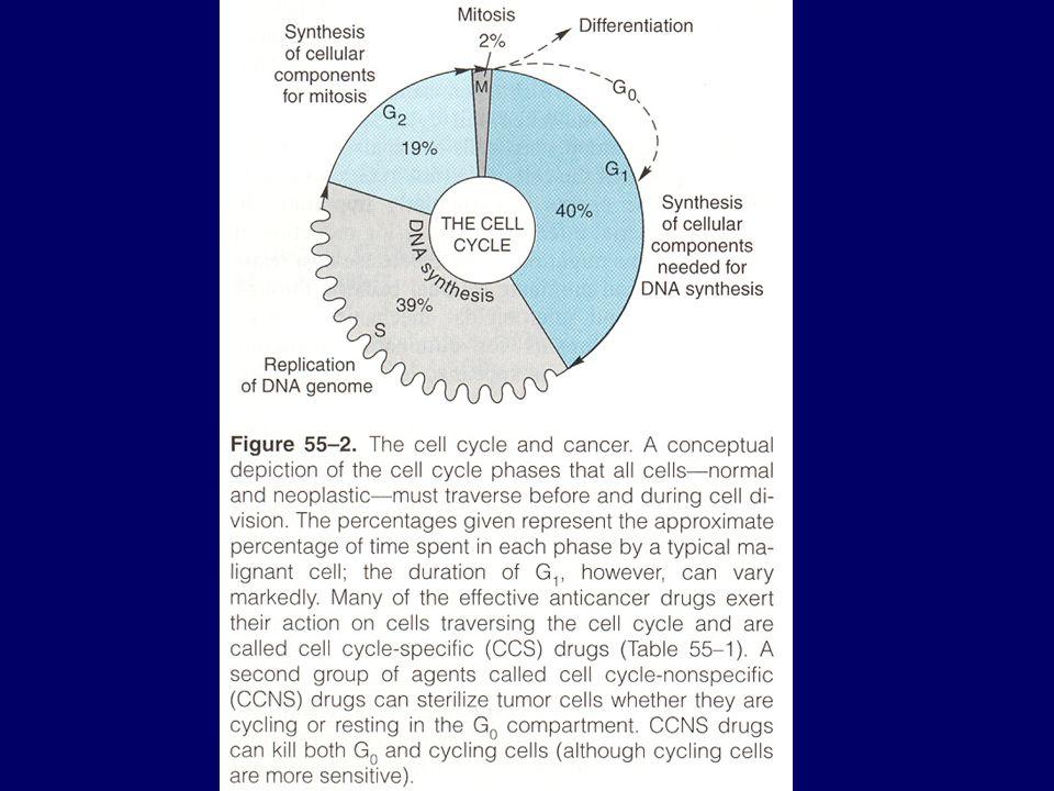 Een chemotherapeuticum kan cyclusspecifiek, fasespecifiek of niet-cyclusafhankelijk zijn: cyclusspecifiek: werken op prolifererende cellen in alle fasen van de cyclus; eventueel meer doden van tumorcellen bij verhoging van de dosis doch gelimiteerd door toxiciteit fase-specifiek: werken vooral op één bepaalde fase van de celcyclus; celdoding bereikt een plateau dat niet kan verhoogd worden door verhogen van de dosis niet-cyclus-afhankelijk: geen specificiteit voor cellen in cyclus en even toxisch voor rustende (G0) als voor delende cellen vb.