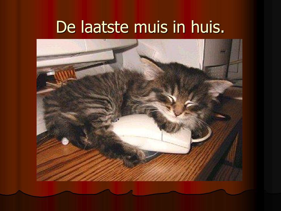 De laatste muis in huis.