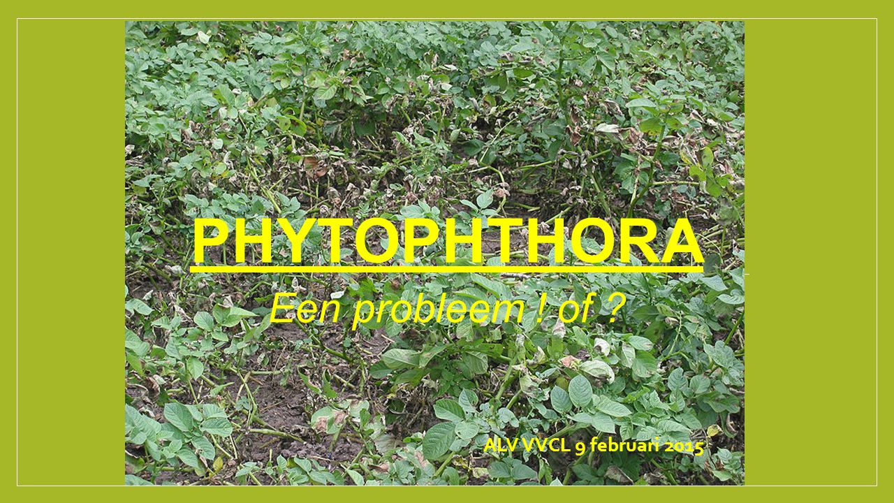 PHYTOPHTHORA Een probleem ! of ? ALV VVCL 9 februari 2015