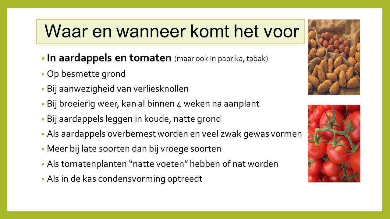 Waar en wanneer komt het voor In aardappels en tomaten (maar ook in paprika, tabak) Op besmette grond Bij aanwezigheid van verliesknollen Bij broeieri