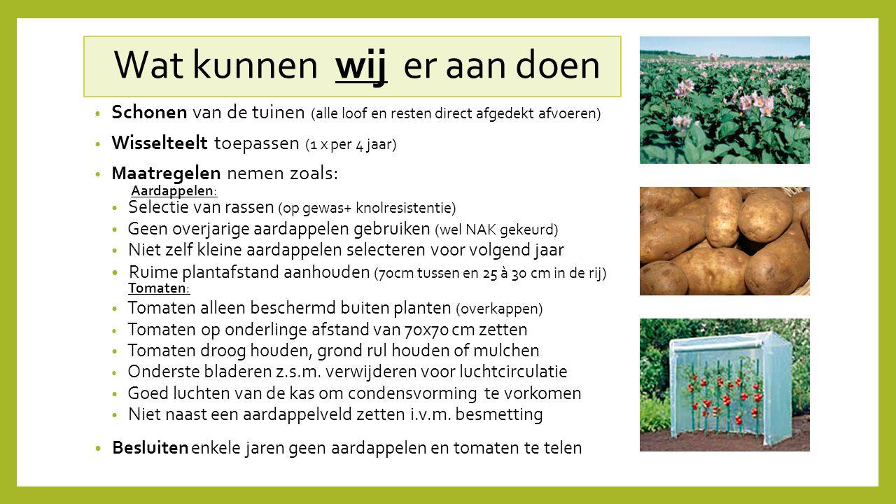 Wat kunnen wij er aan doen Schonen van de tuinen (alle loof en resten direct afgedekt afvoeren) Wisselteelt toepassen (1 x per 4 jaar) M aatregelen ne